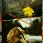 دلنوشته پاییز زندگی درخت هایمان شدیم. نویسنده لیلا مدرس